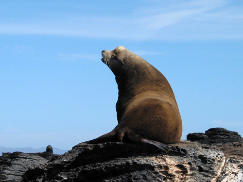 Activities_Basking_Seal_Lg