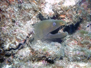 Activities_Moray_Eel